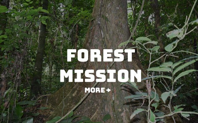 Congo Foundation - forest mission